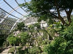 温室の中で飛ぶ蝶たち