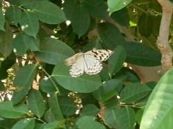 休憩する蝶