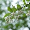 四季(春)